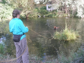 <h5>Watson Pond Play III</h5><p>Watson continues to astound us. Gregg made a long leash out of an old plastic nylon rope for Watson and he goes just about anywhere on the property. Here Watson is taking a dip in the pond in our hot weather.</p>