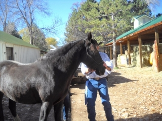<h5>Luna the Mustang</h5><p>&quot;Who is that tall guy in the cowboy hat?&quot;</p>
