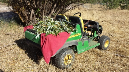 <h5>Willow for the Winter</h5><p>Willow, which we feed our personal horses for pain, is loaded on to to the Gator.</p>